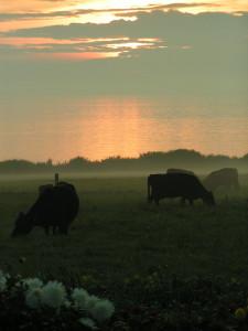 Vesteraas magic on Aeroe, Organic farming