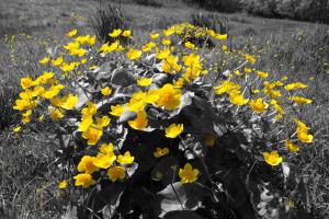 Wilde Bloomen