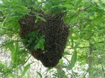 Honung aus Aeroe