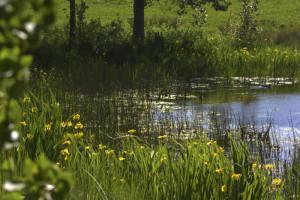 Wilder Natur aus Vesteraas